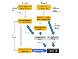 Fettstoffwechsel SAN OMEGA EN cor