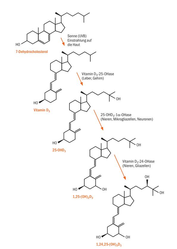 2017-01-27-entstehung-von-vitamin-d